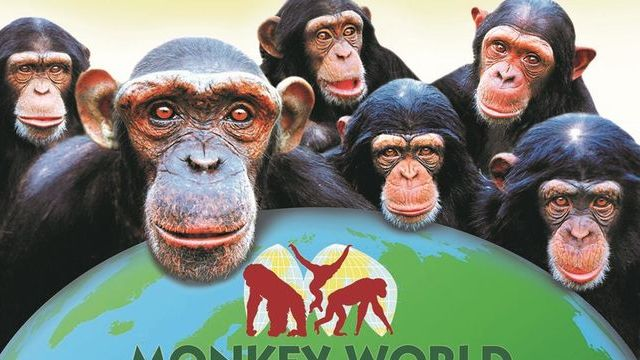 Win 2 Monkey World tickets, plus a VIP tour.